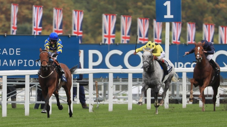 Trueshan: short-priced favourite for the Goodwood Cup after Stradivarius was taken out