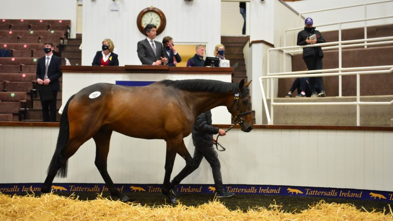 Top lot: the son of Walk In The Park and Cuteasafox makes €280,000 to the bid of Eddie O'Leary, acting on behalf of Bective Stud