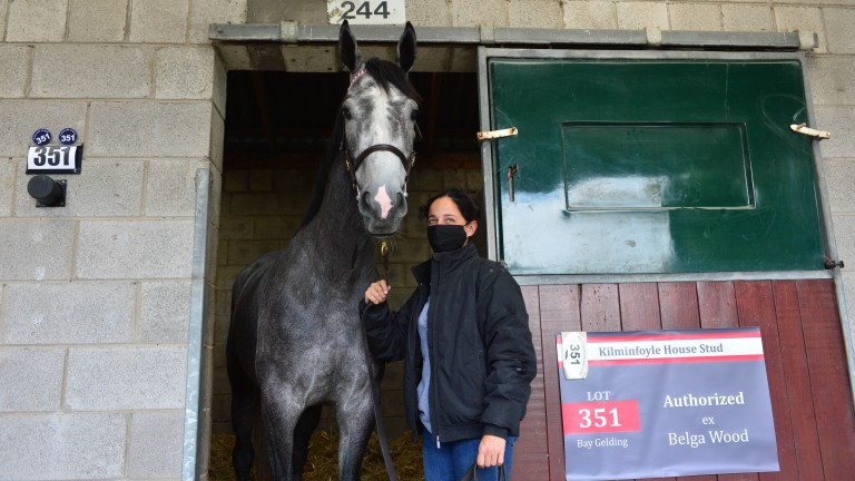 Lot 351: the Authorized gelding out of Belga Wood who was knocked down to Stuart Crawford for €155,000