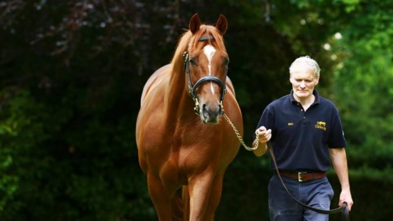 Australia: 2014 Irish Derby winner is the sire of Fernando Vichi