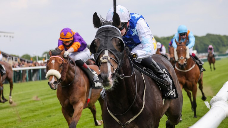 Punchbowl Flyer: has been in superb form this year