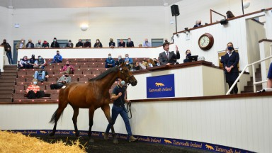 The three-parts brother to Hurricane Fly sells to Michael Shefflin and Paul Holden at €200,000 at the Tattersalls Ireland Derby Sale