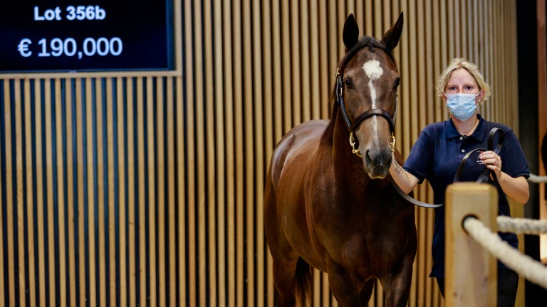 A daughter of European Champion two-year-old Vorda, Saiga is carrying to Le Havre and was sold to join the Castlehyde Stud broodmare band at Arqana on Thursday