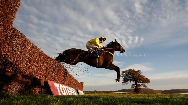 Leg Lock Luke: named after ITV Racing and Sky Sports pundit and ex-jockey Luke Harvey