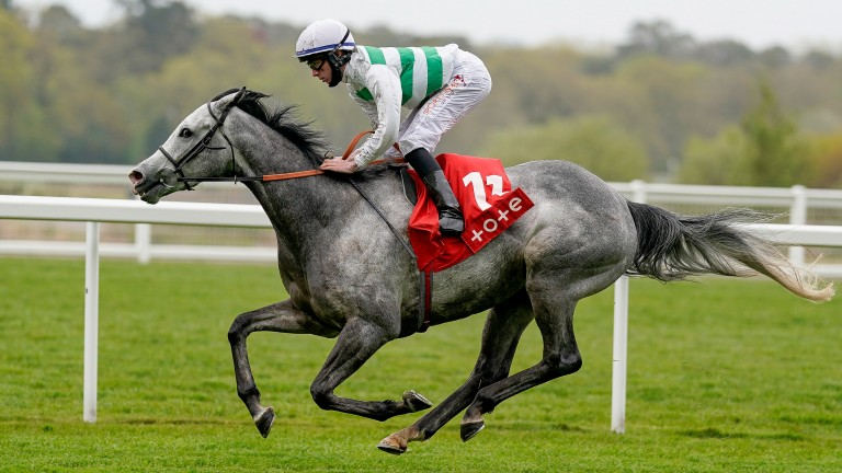 Albaflora: could be the main danger to Wonderful Tonight in the Lillie Langtry