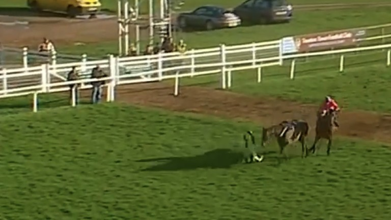 Leg Lock Luke, the 2-1 Taunton favourite, unseats rider Tom O'Brien with the race at mercy