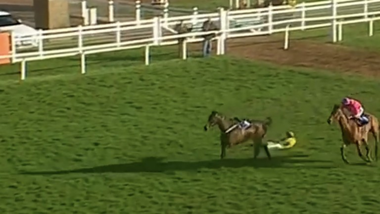 The loose horse hands an easy win to Bajardo, who looked a sure second 75 yards out