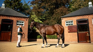 Frankel: the Banstead Manor Stud resident has recorded some phenomenal results this season, including an Anglo-Irish Derby double