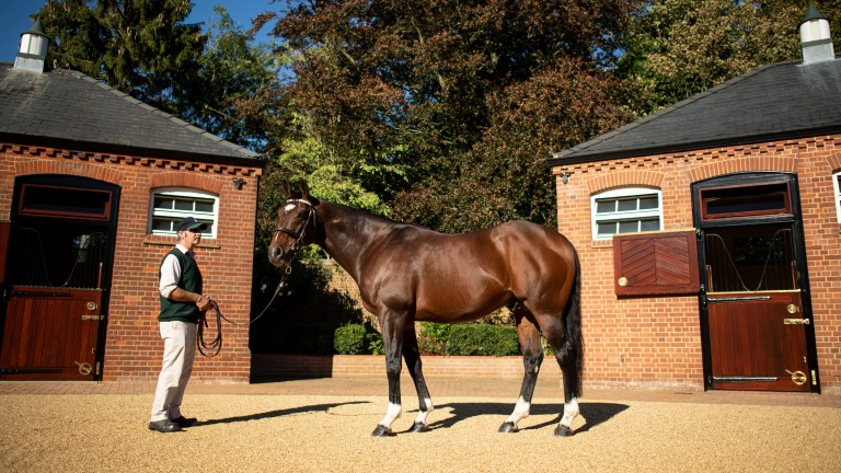 Frankel: the Juddmonte homebred is Galileo's highest-rated runner and arguably his most promising sire son