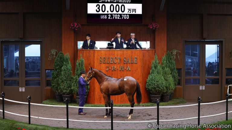 Northern Farm's Deep Impact colt sells to Yuji Hasegawa for ¥300 million at the JRHA Select Sale