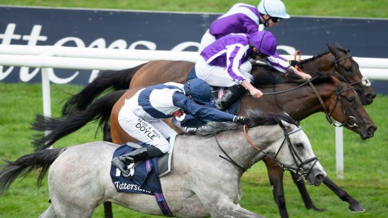 The grey Snow Lantern pipped Mother Earth and Alcohol Free (rail) in the Falmouth Stakes