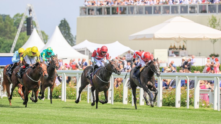 Caturra (left) finishes seventh in the Coventry Stakes at Royal Ascot