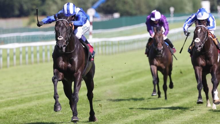 Mutasaabeq: winner at Haydock on Friday