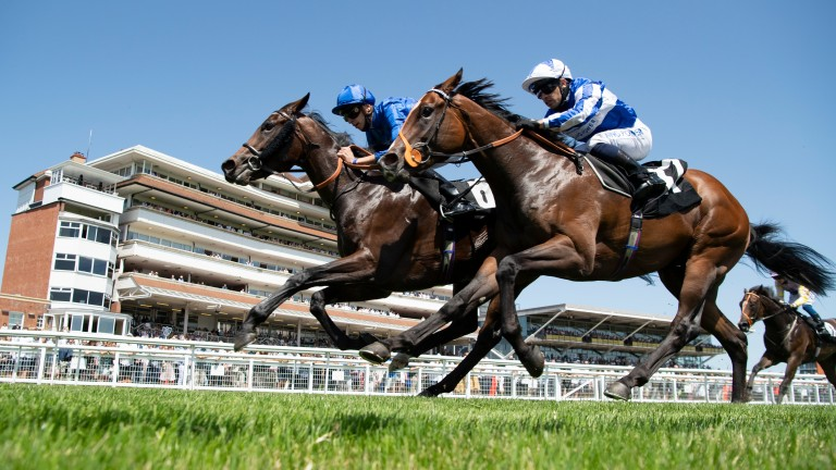 Tropez Power (right) and Home City battle things out in the novice stakes