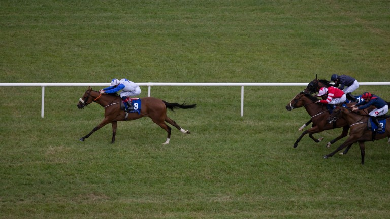 """Peter Fahey on Soaring Monarch: """"He's an improving horse so hopefully he can run a big race"""""""