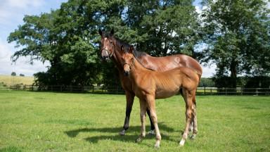 Six-time Group 1 winner Laurens and her first foal, a son of Invincible Spirit who has been given the stable name Ralph