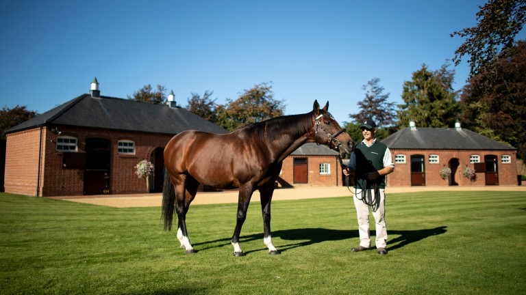 Frankel: Banstead Manor Stud stallion is the sire of 75 stakes winners