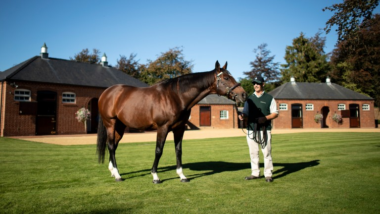 Frankel: Galileo's best son leads the British and Irish sire standings heading into a key weekend of action