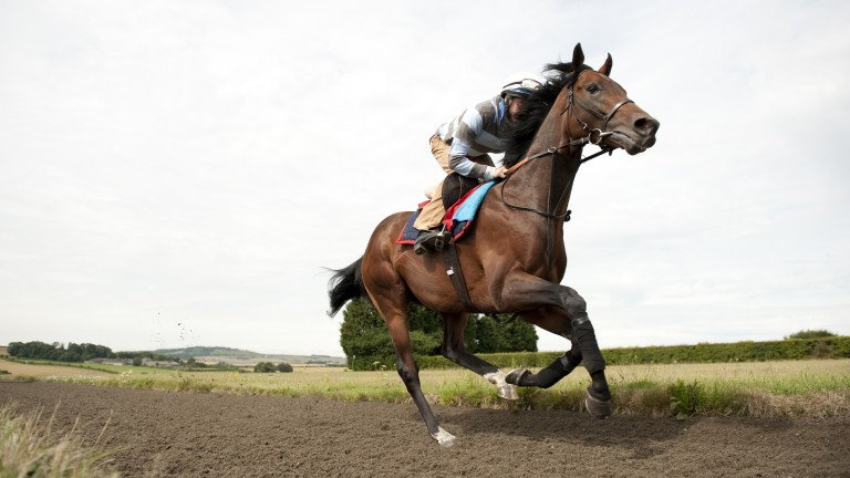 """Richard Hughes: """"The first morning I rode him there was just a feeling"""""""