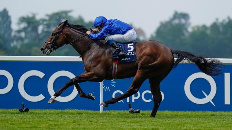 Adayar: is he superior to his Irish Derby-winning stablemate Hurricane Lane?