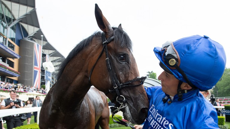 Adayar: the Derby and King George winner has an outstanding chance of capping his season in the most spectacular way on Sunday