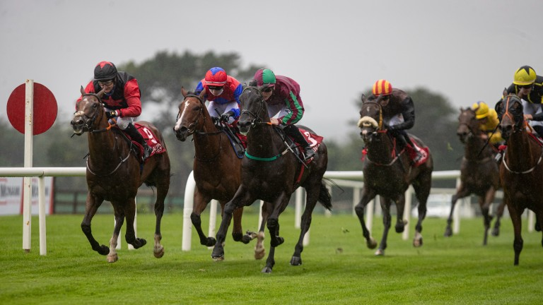 Black Cat Bobby: came out on top in tight finish to Claytonhotelgalway.ie Handicap