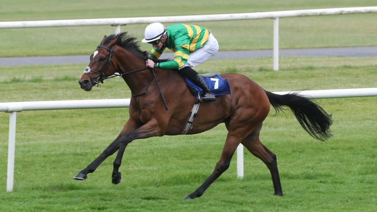 Winner Takes Itall: has live each-way chance says trainer Joseph O'Brien