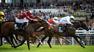 Asymmetric: son of Showcasing was continuing breeder Redpender Stud's fine run of form in the Richmond Stakes at Goodwood