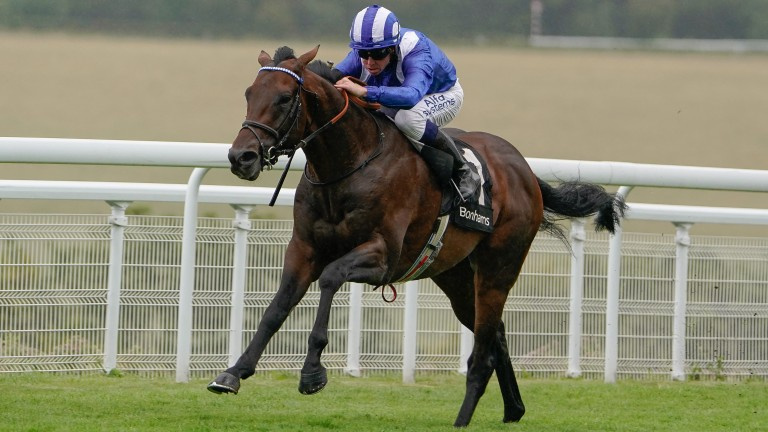 Baaeed: waltzed to victory in the Group 3 Thoroughbred Stakes