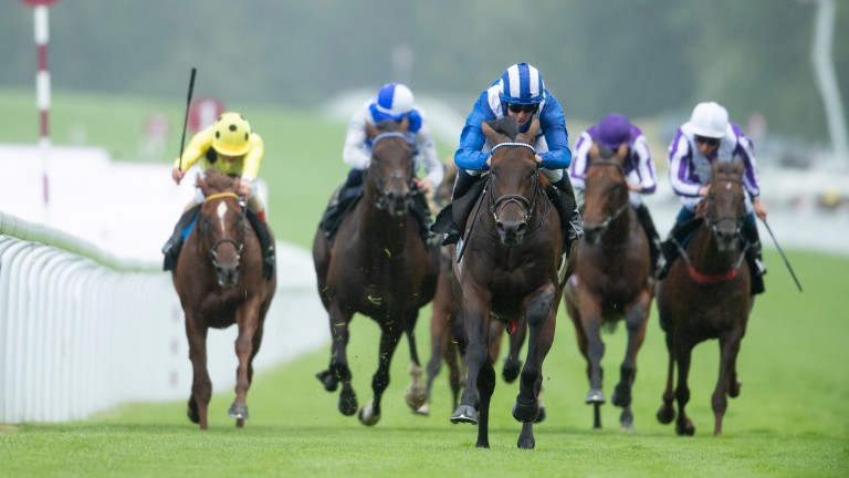 Baaeed: is set to be tested against Europe's best after winning easily at Goodwood