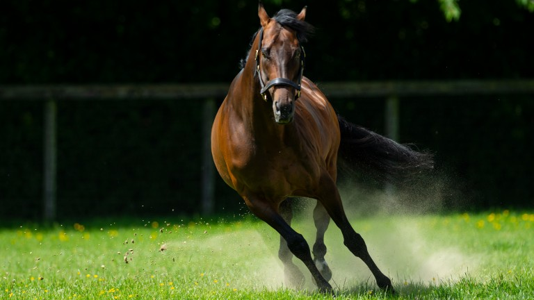 Kingman: Maglietta Fina is carrying a colt by Juddmonte's exciting young sire
