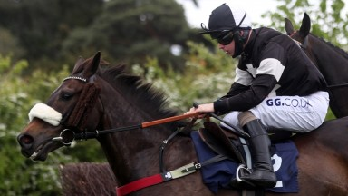 WORCESTER, ENGLAND - MAY 12: Mr Mafia ridden by Sean Bowen in action during The Free Tips Daily On attheraces.com Handicap Chase at Worcester Racecourse on May 12, 2021 in Worcester, England. (Photo by David Davies - Pool/Getty Images)