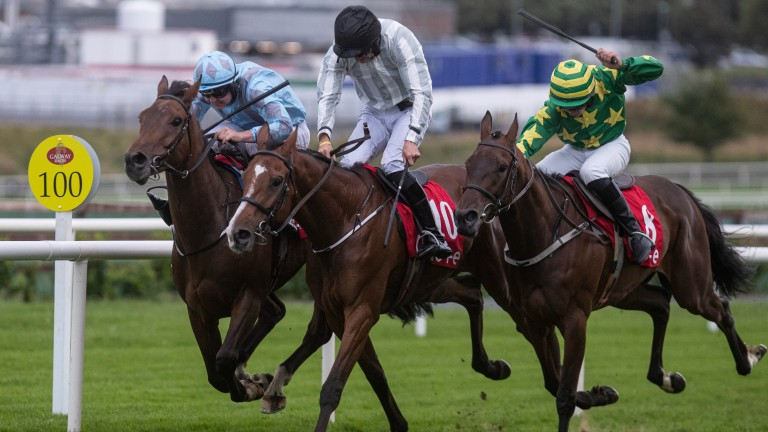 Le Nouveau (right): a half-brother to top-class hurdler The New One