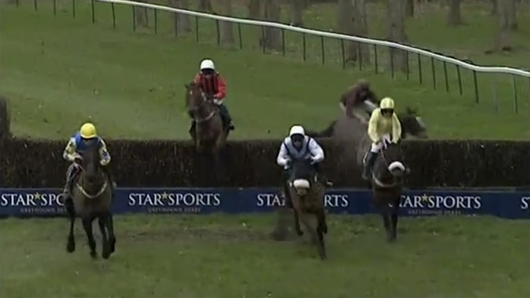 Approaching the obstacle, The Lion Dancer runs out, giving jockey Gavin Sheehan no chance