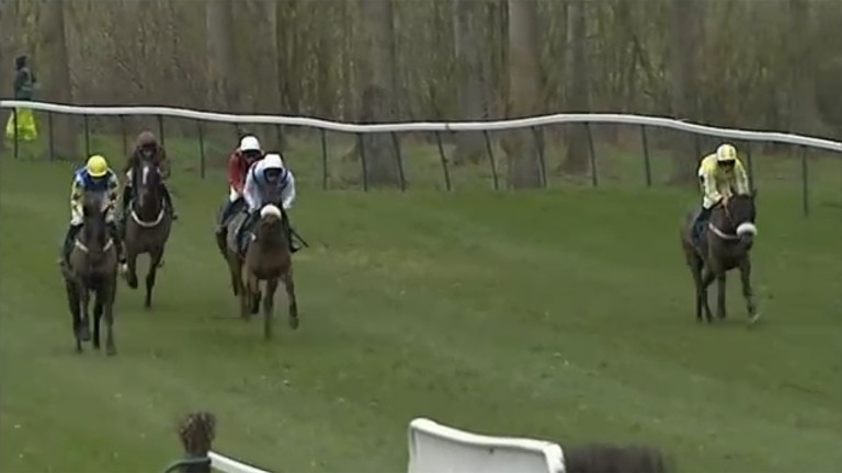 The Lion Dancer (brown) is at the rear of the field approaching the tenth fence