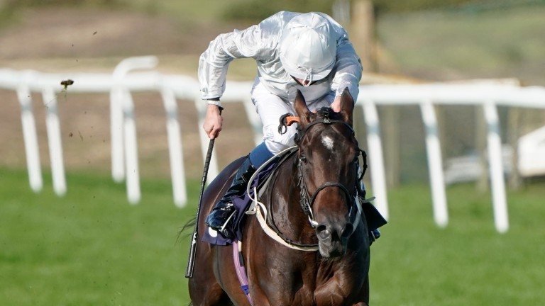 Forest Falcon: could build on his Goodwood fifth in the coming weeks