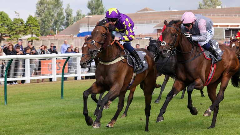 Royal Regent: the Ayr course specialist struck for the fifth time