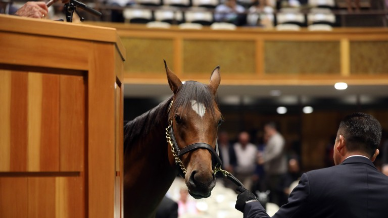 The sale-topper: 'You see two per cent of horses that you sell in a year walk like that'