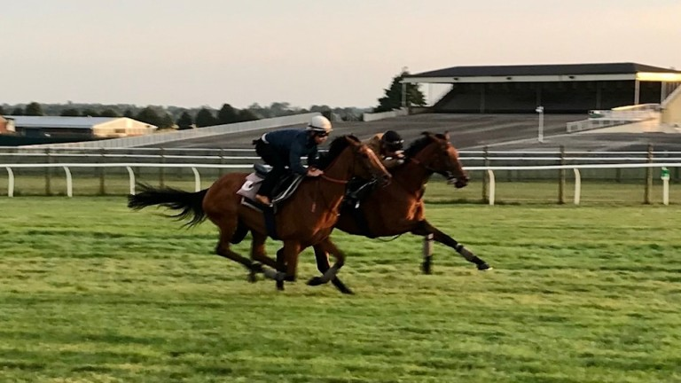 Teona (nearside) is given another chance at Group 1 level in the Prix Vermeille on Sunday