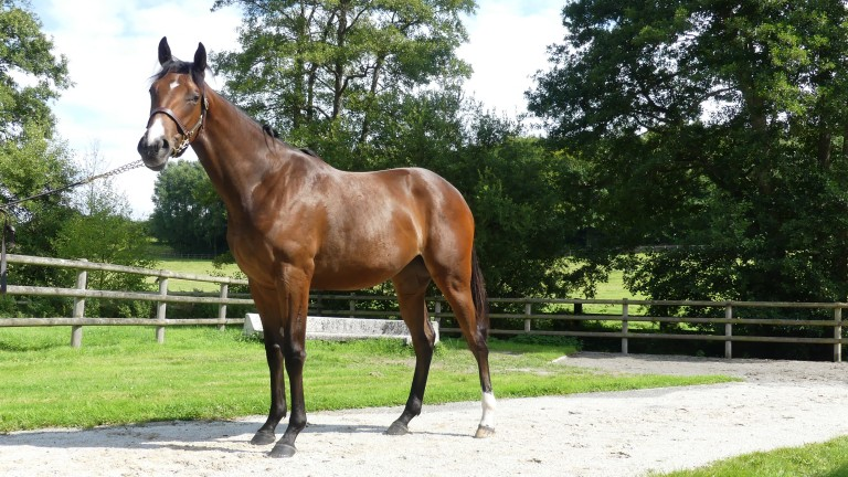 Haras d'Haspel's Kingman half-sister to Native Trail pictured on the farm before being sold for €950,000 at Arqana