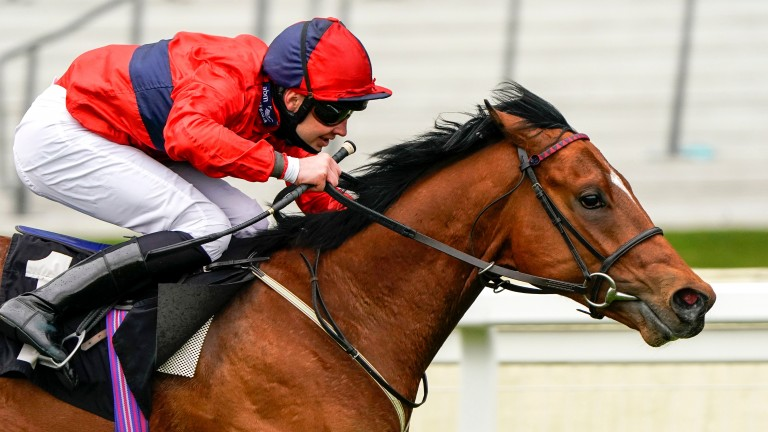 Chipotle, who will be ridden by Hollie Doyle for the first time, has been attracting support