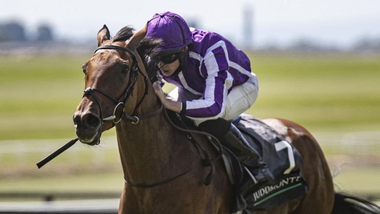 Snowfall: strong favourite to land a third successive Group 1 in the Darley Yorkshire Oaks