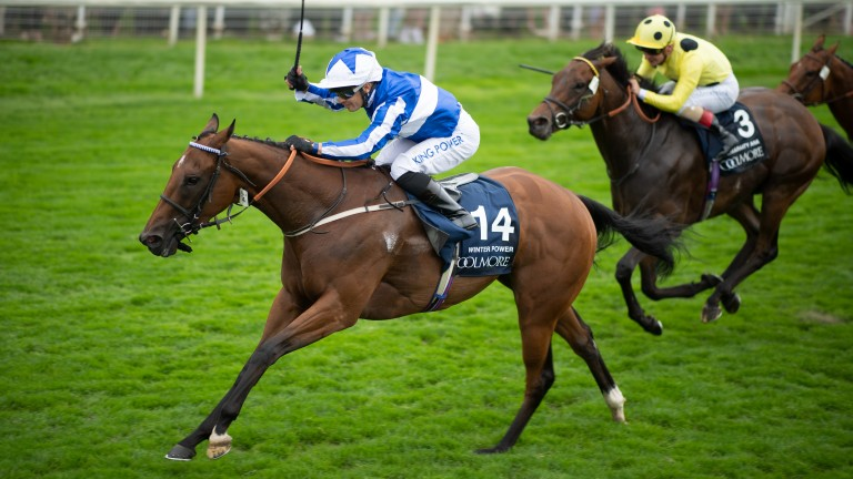 Winter Power: got the better of subsequent Group 1 winner Emaraaty Ana in the Coolmore Nunthorpe Stakes last month