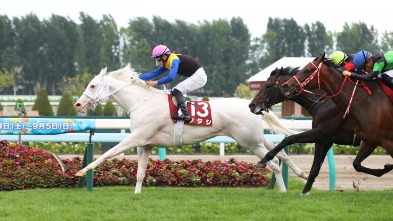The all-white Sodashi and Hayato Yoshida take the Sapporo Kinen by three-quarters of a length