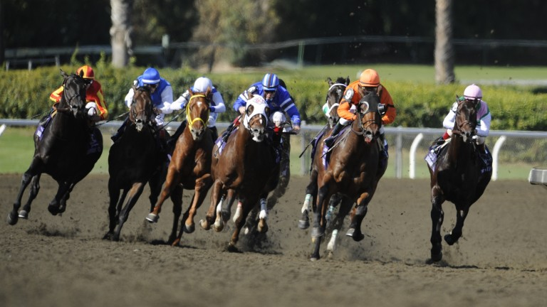 Midnight Lute (left): throat might not have been the best medically but it didn't stop him winning the Breeders' Cup Sprint - twice