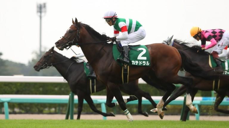 Catedral and Keita Tosaki (No. 2) run out the winners at Nakayama