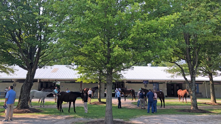 Some 23 offerings from Pin Oak went through the ring on Sunday