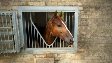 Stradivarius peers out from the back of his box at Clarehaven Stables