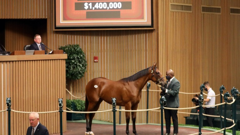 Betz Thoroughbreds' American Pharoah half-sister to recent Spinaway Stakes winner Echo Zulu sells to Northshore Bloodstock for $1.4 million