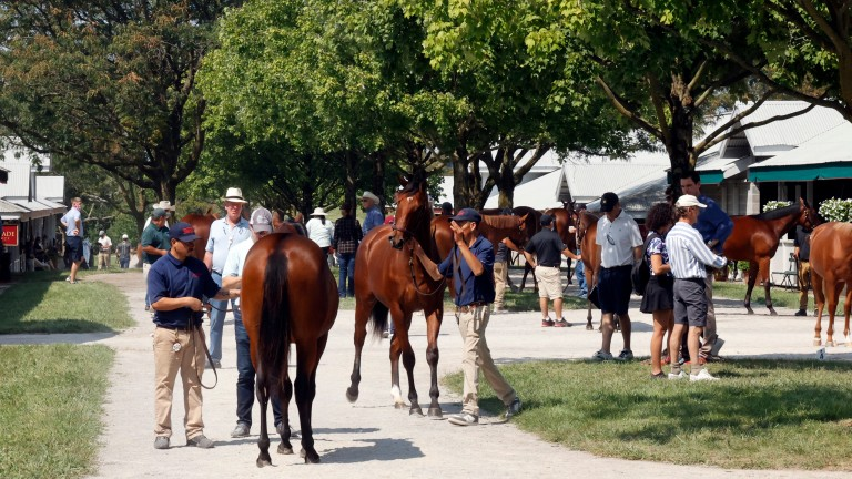 Yearlings take in their surroundings at the Keeneland September Sale